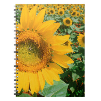Field Of Sunflowers. Heidleberg District Notebook