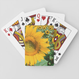 Field Of Sunflowers. Heidleberg District Playing Cards