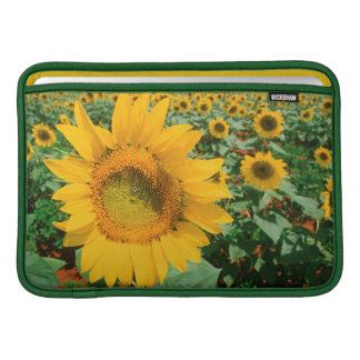 Field Of Sunflowers. Heidleberg District Sleeve For MacBook Air