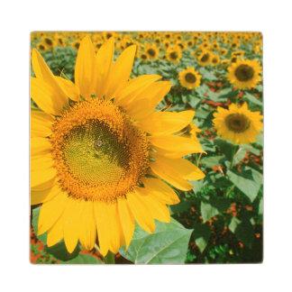 Field Of Sunflowers. Heidleberg District Wood Coaster