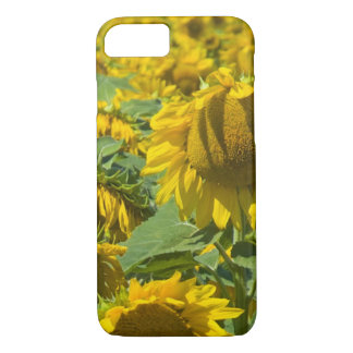 Field of Sunflowers iPhone 7 Case