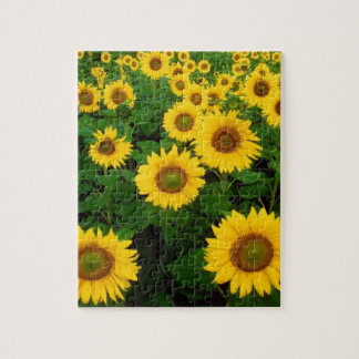 Field Of Sunflowers Jigsaw Puzzle