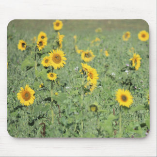 Field of Sunflowers Mouse Mat