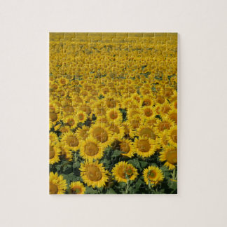 Field of Sunflowers Puzzle