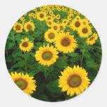 Field of Sunflowers Round Stickers