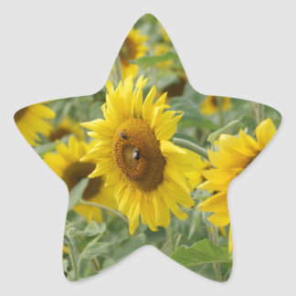 Field of Sunflowers Star Sticker