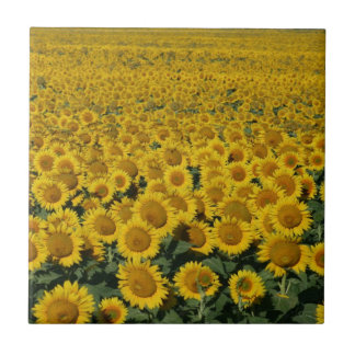 Field of Sunflowers Tile