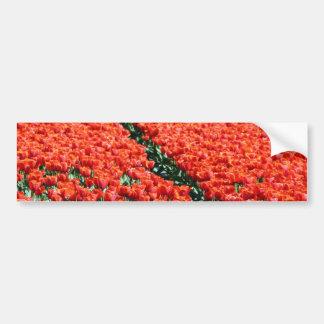 Field of tulips bumper sticker