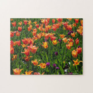 Field of Tulips Jigsaw Puzzle