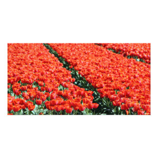 Field of tulips personalised photo card