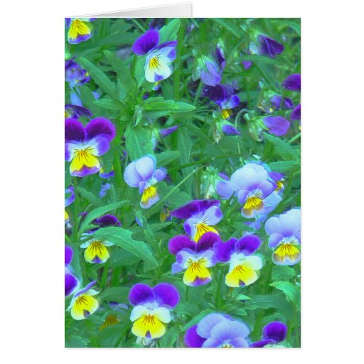 """""""Field Of Violets"""" Card"""