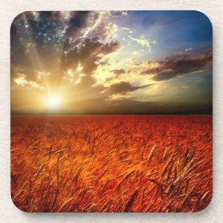 Field of wheat and sunset coaster