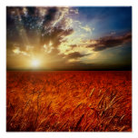Field of wheat and sunset poster