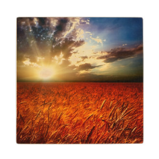Field of wheat and sunset wood coaster