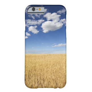 Field of wheat barely there iPhone 6 case
