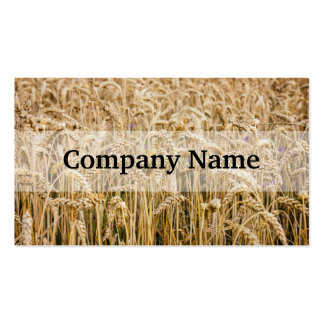 Field Of Wheat, Golden Grains Pack Of Standard Business Cards