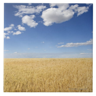Field of wheat tile