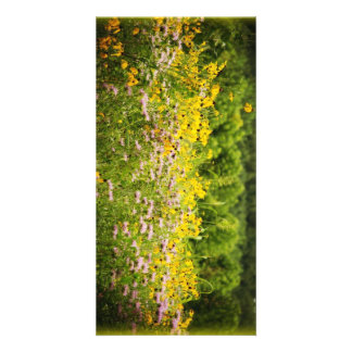 Field of wildflowers black eyed susies picture card