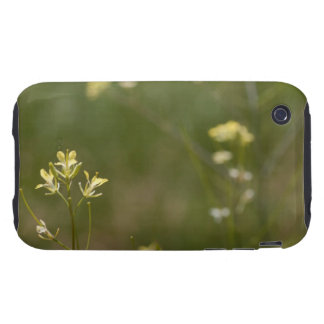 Field of Yellow Flowers Tough iPhone 3 Cases