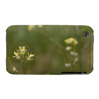 Field of Yellow Flowers iPhone 3 Cover