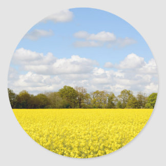 Field of yellow rapeseed classic round sticker