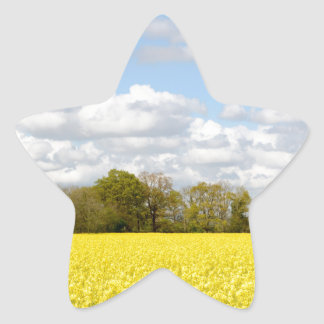 Field of yellow rapeseed star sticker