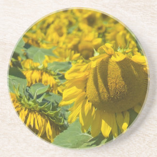 Field of Yellow Sunflowers Coaster