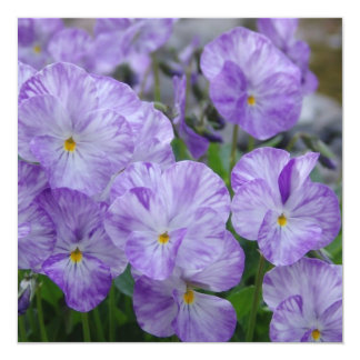 Field Pansies 13 Cm X 13 Cm Square Invitation Card