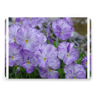 Field Pansies Personalized Announcements