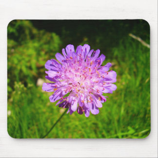 Field Scabious Mouse Mat