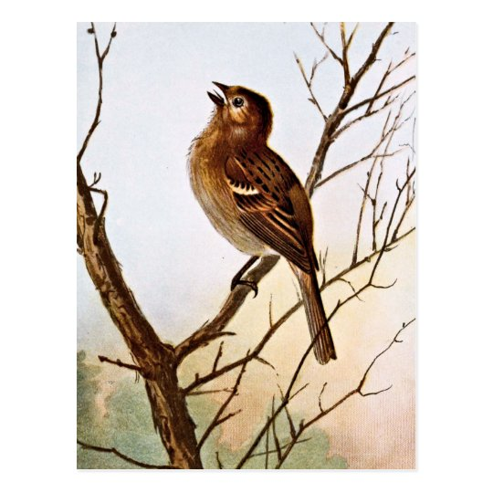 Field Sparrow Singing Postcard