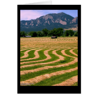 Field with Cut Hay Note Card
