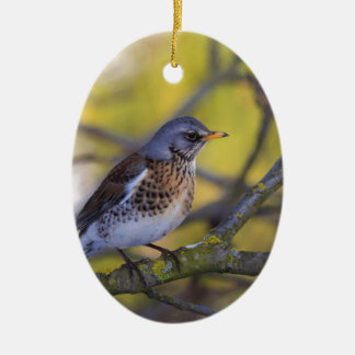 Fieldfare Ceramic Oval Decoration