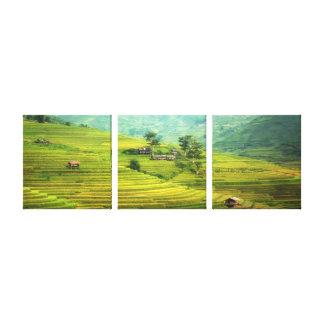 Fields golden delicious canvas print