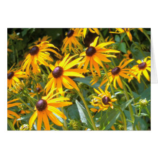 Fields of Black Eyed Susan Flowers Greeting Card