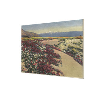 Fields of Desert Sunshine & Wild Verbenas Canvas Print