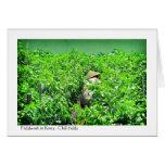 Fieldwork in Korea - Chilli fields Cards