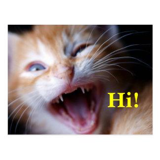 Fierce Kitten Postcard