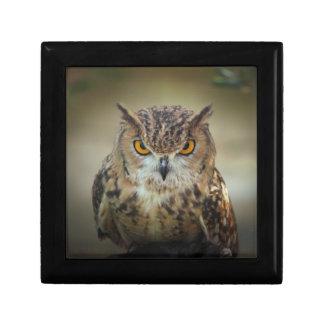 Fierce Orange Eyed Owl Gift Box