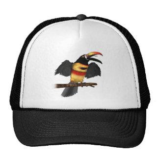 Fiery-Bill Aracari Trucker Hat