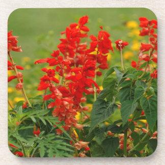 Fiery Red Hot Sally Salvia Flower Garden Coasters