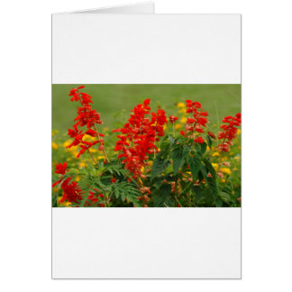 Fiery Red Hot Sally Salvia Flower Garden Greeting Card