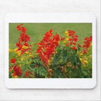 Fiery Red Hot Sally Salvia Flower Garden Mousepad