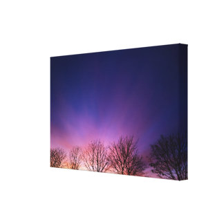 Fiery winter sunset with line of bare trees canvas print