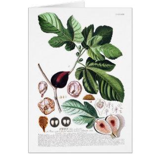 Fig Card