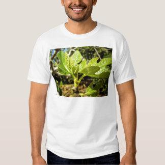 Fig Leaves Tshirts