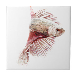 Fighting Fish Small Square Tile