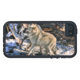 Fighting Grey Wolf Challenge Wildlife Photo iPhone 5 Covers