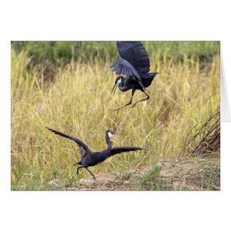 Fighting Herons Greeting Card