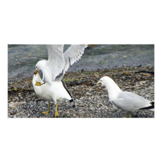 Fighting Seagulls Photo Greeting Card